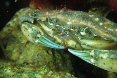 Ruben_3ePlaats_Onderwater